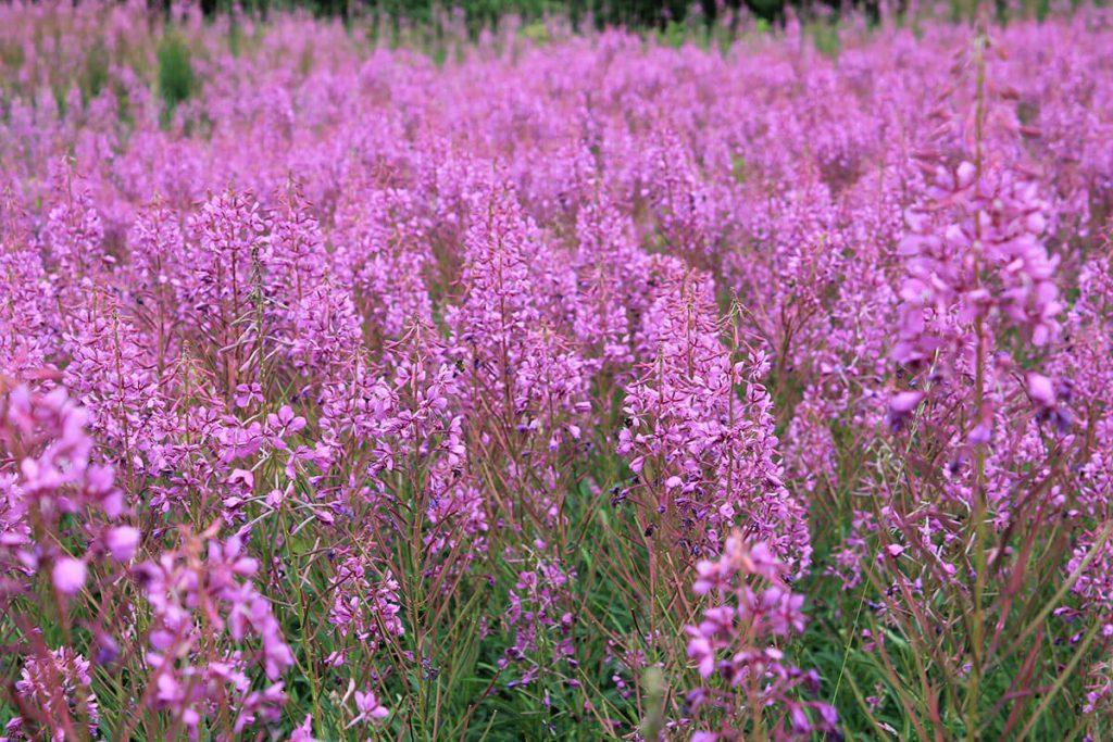a wildflower garden in Tunbridge Wells, Kent