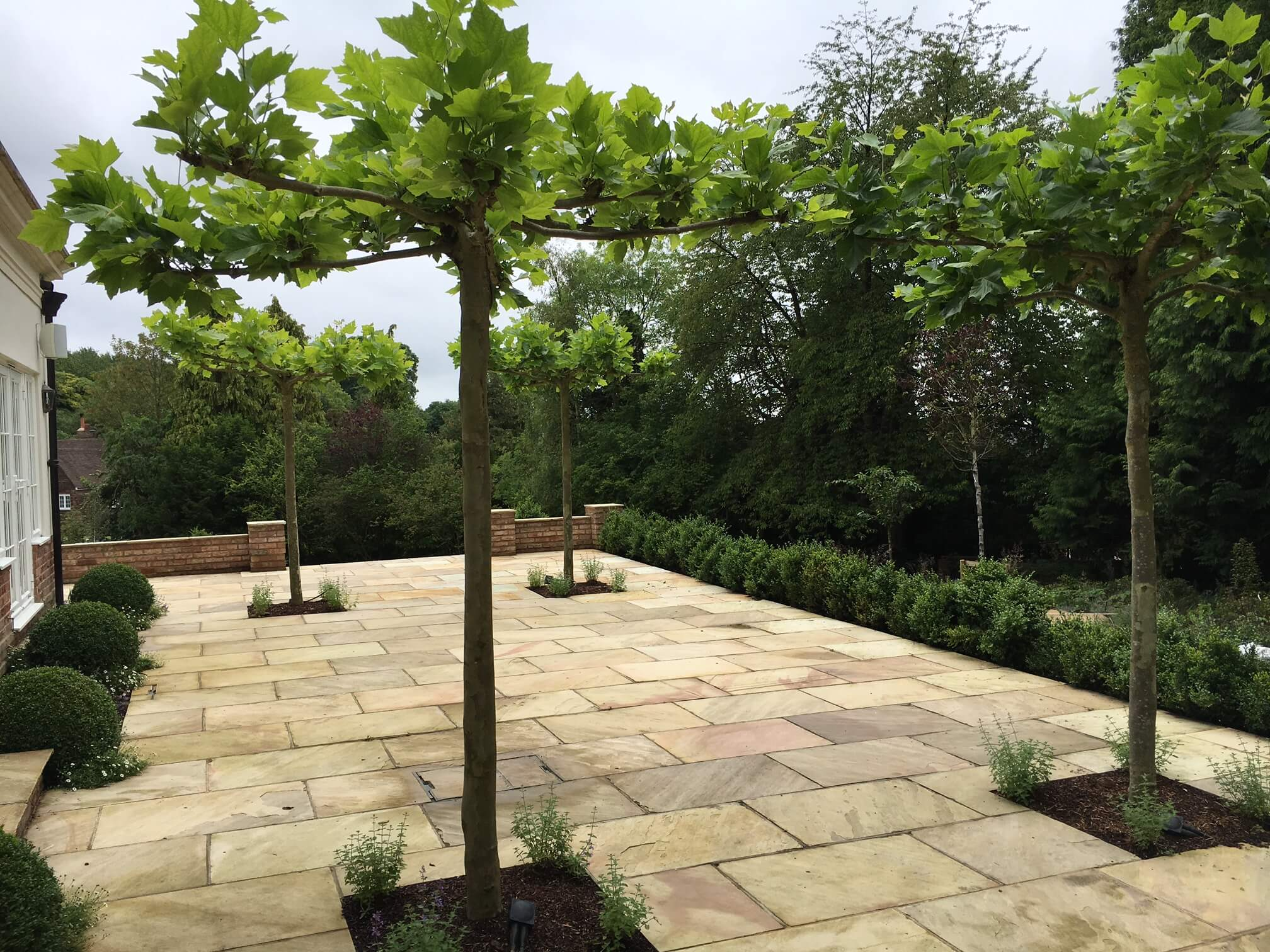 Parasol trees custom garden terrace